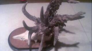 getlinkyoutube.com-Weird And Unusual Animals