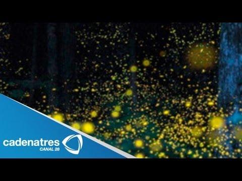 Santuario de luciérnagas de Tlaxcala ofrece un espectáculo durante ele verano