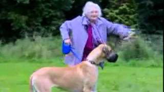 Grandma Gets Pulled By Dog width=