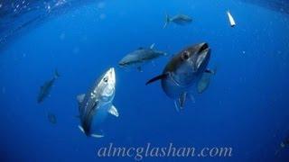 getlinkyoutube.com-Bluefin explosion