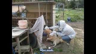 getlinkyoutube.com-HOSHI FAMILY 見捨てられた動物たちを 救え