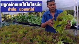 getlinkyoutube.com-ปลูกผักแบบไฮโดโปรนึง-คำนึง นวลมณีย์