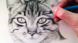 getlinkyoutube.com-How to Draw a Cat