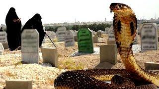getlinkyoutube.com-فتحوا قبر شاب ليدفنوه فوجدوا ثعبان ضخم في انتظاره - قصة اغرب من الخيال
