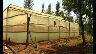 getlinkyoutube.com-Low cost greenhouse farming