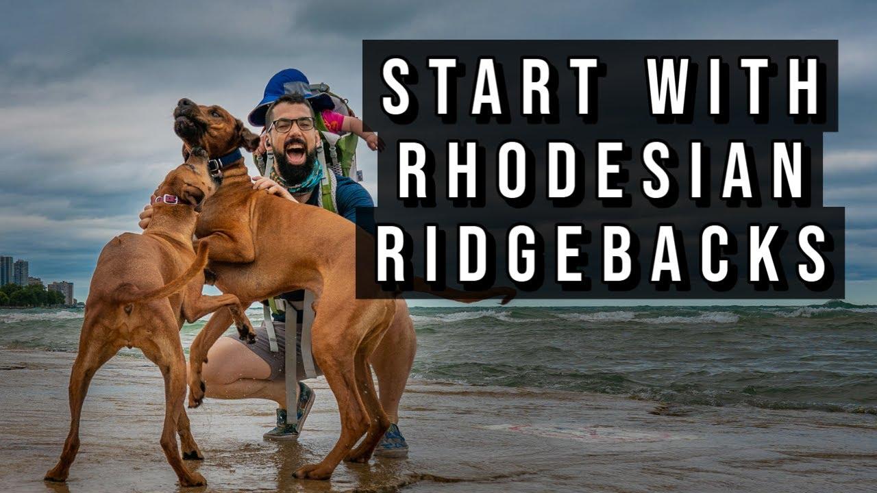 My Morning Run with Rhodesian Ridgebacks Video Thumbnail