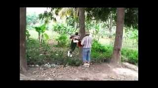 getlinkyoutube.com-Begom And Dema Anpotans manman 2