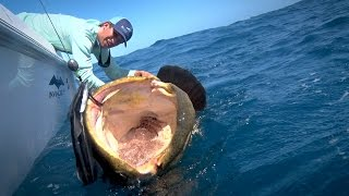 getlinkyoutube.com-Monster Fishing on Shallow Florida Wrecks