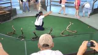 getlinkyoutube.com-Snakes cobra show  Part 1
