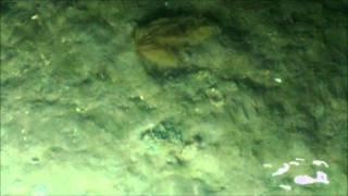 getlinkyoutube.com-Flounder gig video