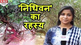 क्यों शाम के बाद Nidhivan जाना हैं मना !!!Don't Miss