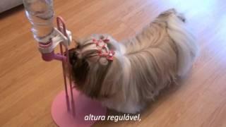 getlinkyoutube.com-h2au - Bebedouro PET Resistente pra Cachorro! //Maltês Lhasa Apso Shih Tzu//