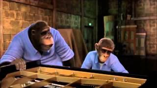 getlinkyoutube.com-Monkey Symphony