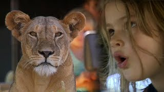 Children Watch Lion Kill Zebra - This Wild Life - BBC Earth