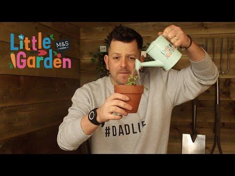 M&S | The Skinny Jean Gardener's Review of Little Garden Ep2