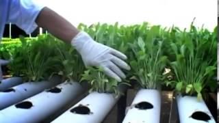 getlinkyoutube.com-pertanian Hidroponik - Rindo Simanjuntak
