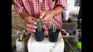 getlinkyoutube.com-graft cactus1
