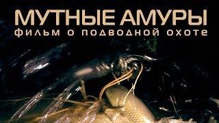 getlinkyoutube.com-Мутные Амуры