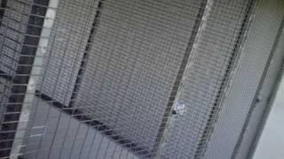 getlinkyoutube.com-AviarioGlez - Construccion de voladera