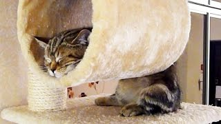 getlinkyoutube.com-Funny Cats and Cute Kittens Sleeping in Weird  Positions Compilation