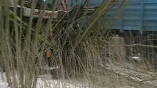 getlinkyoutube.com-Hackschnitzel aus Weiden mit Claas Jaguar