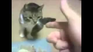 getlinkyoutube.com-Zwierzęta udają martwe - super śmieszne !!