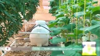 getlinkyoutube.com-الامارات الاولى عالميا في صناعة انظمة الزراعة المائية/سيف علي الشامسي
