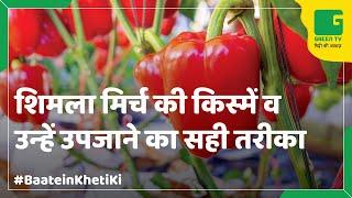 getlinkyoutube.com-Capsicum Farming (शिमली मिर्च की खेती) In Baatein Kheti Ki - On Green TV