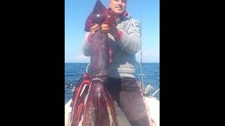 getlinkyoutube.com-Θραψαλο 7 κιλων. Giant squid dead, how to cut and clean it