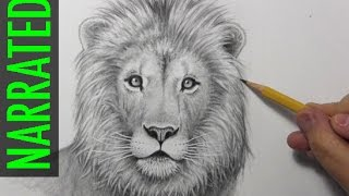 getlinkyoutube.com-How to Draw a Lion [Narrated, Step by Step]
