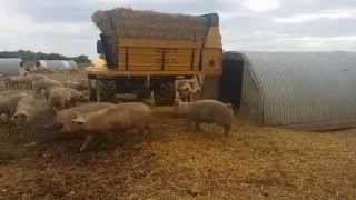 Bale Boss 1 Front Mounted Side Firing Bale Processor bedding Pigs in Pig Arks in fields - AMIA Ltd