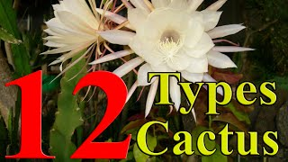 getlinkyoutube.com-Cactus Plants - 12 Types of Cactus you can Grow at Home