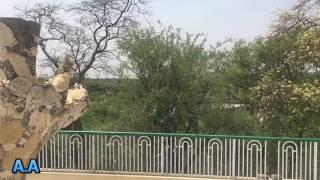 Lal Badshah Darbar 2017
