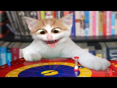 Vídeos engraçados de  gatos  tomando  susto - gatos  brincando - gato divertido