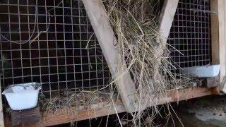 getlinkyoutube.com-Уличное содержание кроликов круглый год