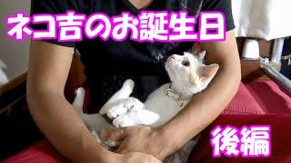 getlinkyoutube.com-捨て猫のネコ吉、保護から1年のお誕生日【後編】1 year of protection cats