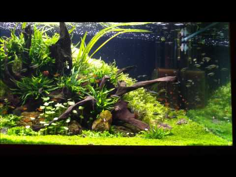 "Berkay BENGI's 1125L Aquascape ""Regrowth"""