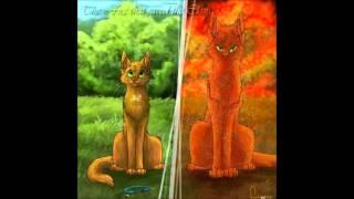 getlinkyoutube.com-Die 10 stärksten Katzen aus WarriorCats