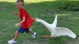 getlinkyoutube.com-Zwierzęta Nigdy Nie Uda Się Uczynić Nas Śmiać - Bardzo Śmieszne Zwierząt