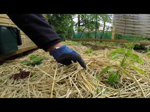 Problème de limace !!! une solution en permaculture.