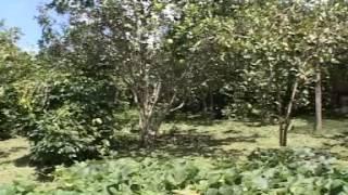 getlinkyoutube.com-ตามรอยพระราชดำริ เกษตรผสมผสาน