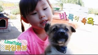 getlinkyoutube.com-귀여운 아기 강아지 바둑이 목욕 놀이 Cute baby bathing Pets Puppy Play Badugi 犬バス遊び 라임튜브