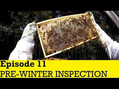 Flow Hive - Episode 11 - Pre-Winter Inspection