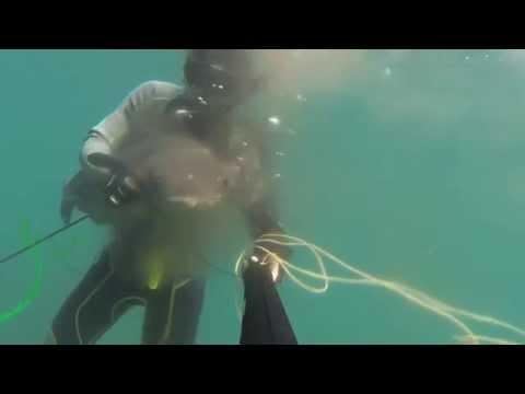 Spearfishing in Thailand EP.2  Nov 30, 2014 (ดำน้ำยิงปลา)
