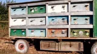 Павільйон для бджіл на 24 вулики-лежаки