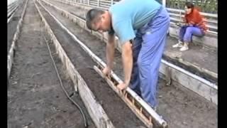 Овощеводство по Миттлайдеру 10 - Выращивание помидор