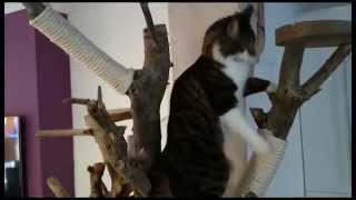 DIY Homemade Real Tree Wood Indoor Cat Tree