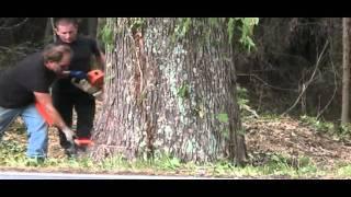 getlinkyoutube.com-52'' GUM TREE MS 880 MAGNUM STIHL.mp4