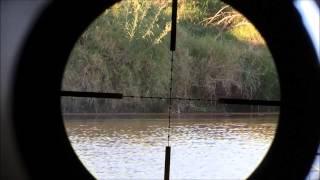 getlinkyoutube.com-Airgun hunting nutrias and pigeons in Uruguay