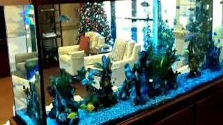 getlinkyoutube.com-265 Gallon African Cichlid Aquarium